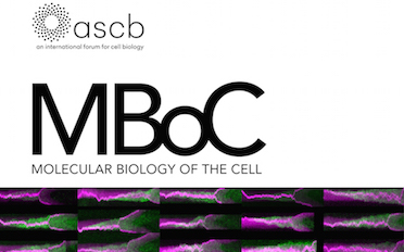 Our paper is featured on the cover of MBoC