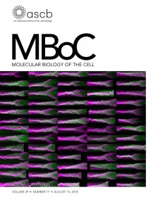 MBoC-29-17-Cover.indd